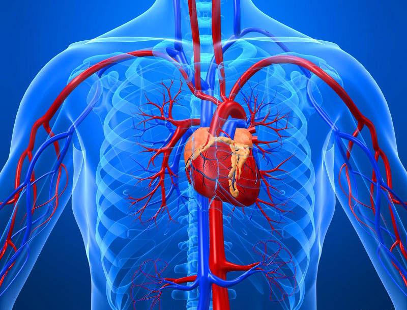 больные зубы провоцируют болезни сердца